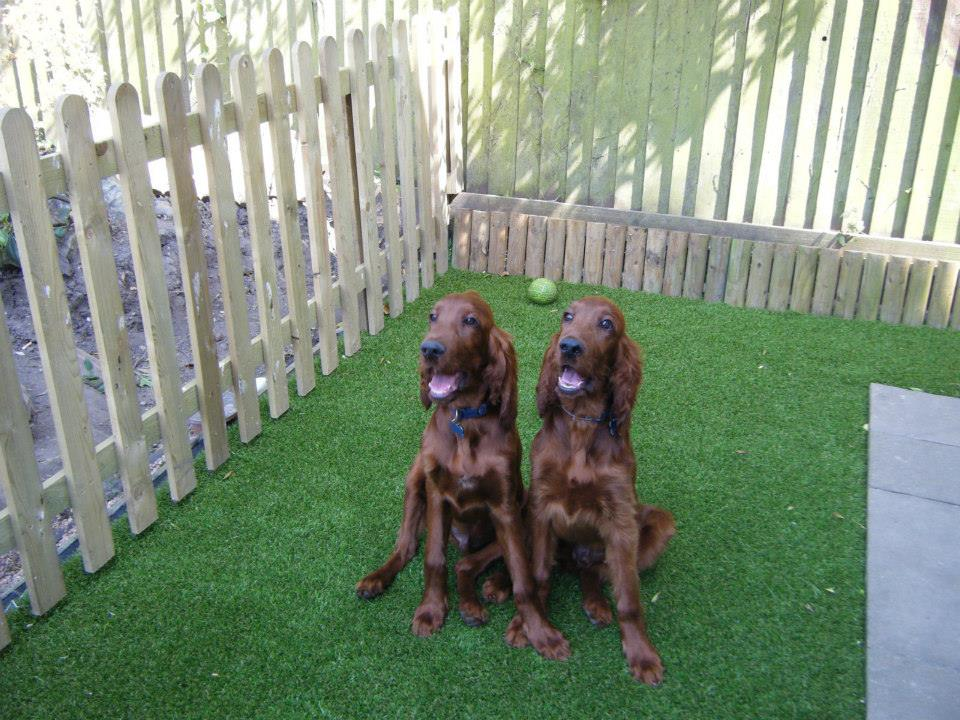 pet friendly artificial grass
