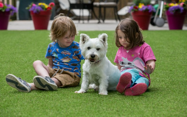 Children and Dog on Artificial Grass